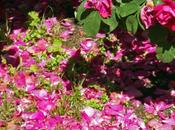curo questi fiori