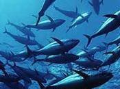 Quote tonno. pescatori marsalesi denunciano l'ex ministro Catania