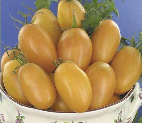 I pomodori gialli una curiosita da mettere nell orto for Gombo ricette