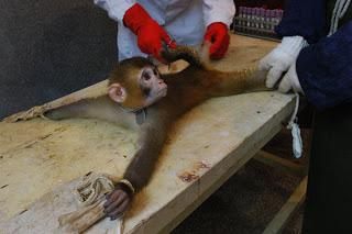 Stop Vivisection Day: 15 giugno 2013