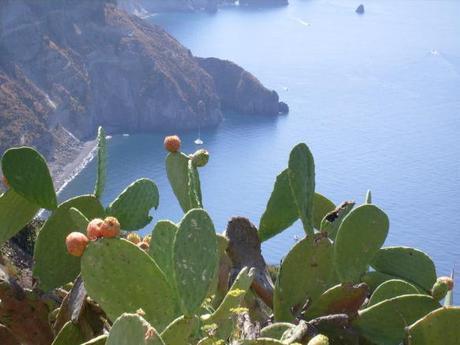 Fichi d'India in sicilia