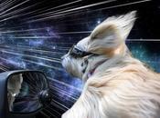 cani, vento viaggi tempo