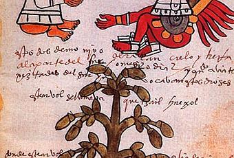 Un viaggio attraverso la Storia Le-origini-del-cioccolato-sono-molto-antiche--T-aI9osp