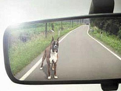 abbandono cani vacanze