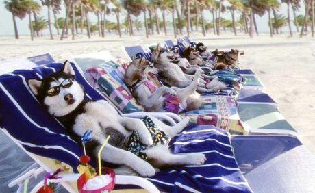 vacanze cane