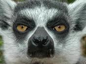 Trent'anni sentirli. Infatti sento sessanta. grande voglio essere lemure.