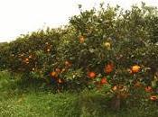 """L'agricoltura come """"nuova"""" economia"""