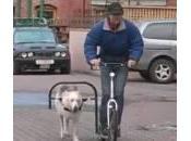 Cane scooter, muove monopattino zampe (Video)