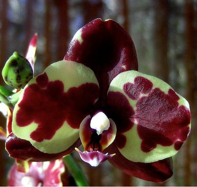 Vivere nell 39 acqua paperblog for Orchidea acqua