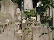 Istanbul, Europa: cimiteri valle degli usignoli