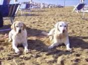 Liguria, Beach spiagge attrezzate nostro amico cane