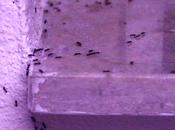 Formiche, ragionamenti sulla guerra rimedi chimici quelli naturali