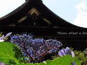 Kyoto nascosta#3: ortensie Fujinomori jinja