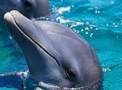 delfini chiamano nome