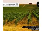 Cantine Settesoli: come rilanciare mercato italiano vino