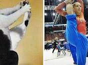 Animali nati ginnastica artistica