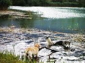Escursione Lago Cavazzo Carnico (UD) cani