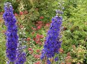 Attività all'aria aperta: Giardino della Rosa
