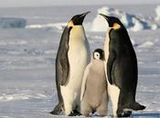 """Spiamo pinguini stasera """"Superquark"""""""