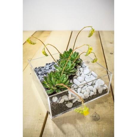 Bomboniere con piante grasse bomboniere utili trendy ed - Vasi con piante grasse ...