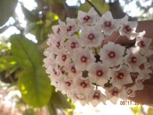 Hoye e fiori di agosto paperblog for Fiori di agosto