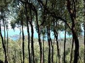 Vacanze Toscane.