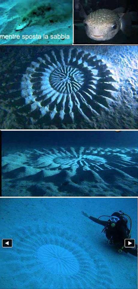 Il pesce palla un artista incredibile paperblog for Pesce palla disegno