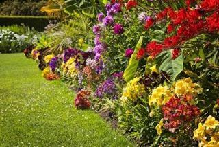 Un giardino e 39 un insieme di piante paperblog for Mobilia e un insieme di