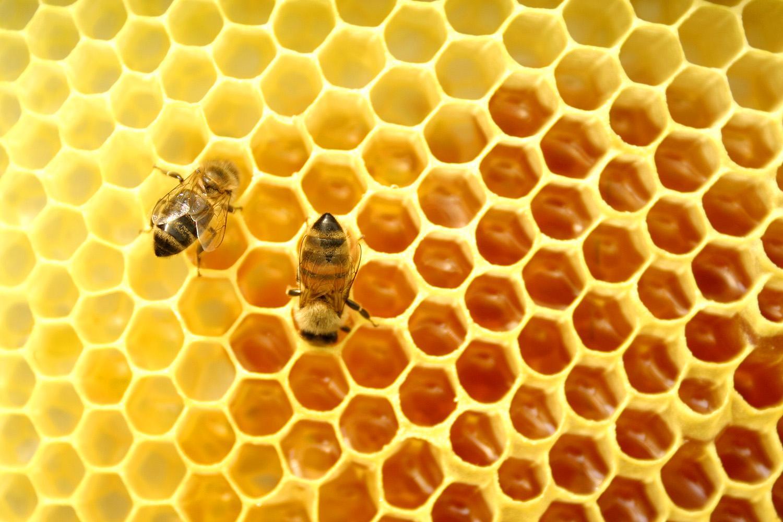 Пчелиный забрус - это восковая плёнка, которой запечатаны пчёлами соты с мёдом, обладающая уникальным...
