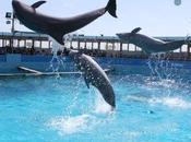 Delfini sotto sequestro delfinario Rimini