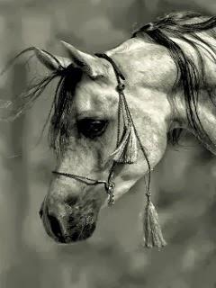 Wallpaper: Arabo grigio