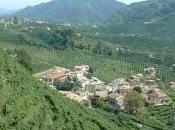 Città Vino: bene Galan colline Prosecco patrimonio Unesco
