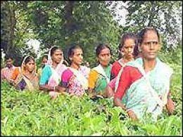 Donne indiane in una piantagione delle fiji