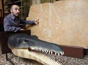 Nuovo coccodrillo preistorico scoperto lastre calcaree destinate cucina
