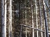 Certi alberi