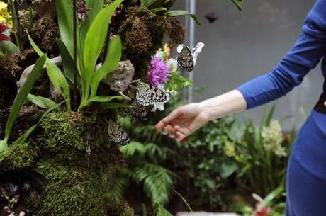 Ultimi giorni per la casa di farfalle paperblog for Ultimi progetti di casa