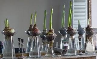Bulbi In Vaso Di Vetro.Vasi In Vetro Per Bulbi Coltivati In Acqua Paperblog