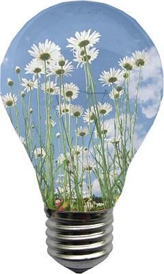 Mettete i fiori nelle vostre lampadine - Paperblog