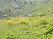 presto verdi monti!