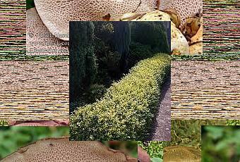 Siepi da giardino sempreverdi paperblog - Siepi ornamentali da giardino ...