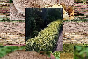 Siepi da giardino sempreverdi paperblog for Siepi da giardino sempreverdi