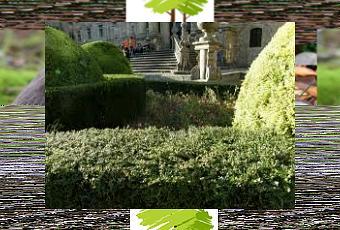 Siepi Da Giardino Fiorite : Siepi da giardino paper