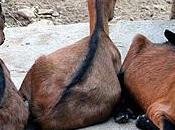 Visita Rifugio Animali Felici (Brissago Valtravaglia