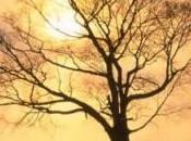 L'albero spoglio, morire rinascere