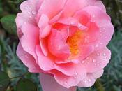 Trippa vitello alla casalinga Boni e... tornate fiorire rose...