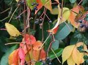 Fall foliage Valle Olona