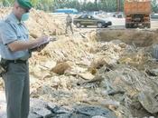 camorra discariche rifiuti tossici Puglia