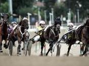 Ippica: domenica Vinovo Gran Premio delle Nazioni stella Timoko