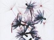 Tentativi botanica degli affetti Beatrice Masini. lettura