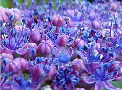 Alberi e arbusti nel giardino invernale paperblog for Giardino invernale
